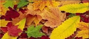 foglie gialle autunnali